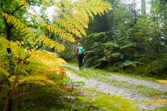 goldsteig-trail-wanderweg-dsc_4804