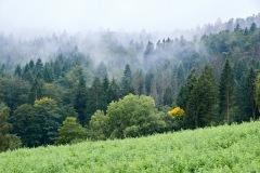 goldsteig-trail-wanderweg-dsc_4812
