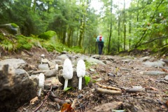 goldsteig-trail-wanderweg-dsc_4821
