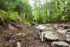 goldsteig-trail-wanderweg-dsc_4823