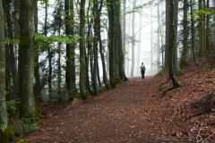 goldsteig-trail-wanderweg-dsc_4841