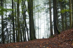 goldsteig-trail-wanderweg-dsc_4842
