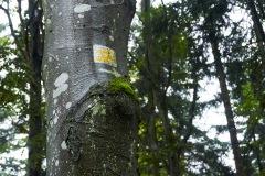 goldsteig-trail-wanderweg-dsc_4848