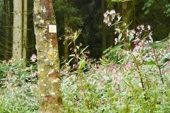 goldsteig-trail-wanderweg-dsc_4850