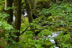 goldsteig-trail-wanderweg-dsc_4873