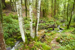 goldsteig-trail-wanderweg-dsc_4878