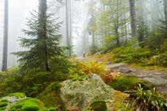goldsteig-trail-wanderweg-dsc_4889