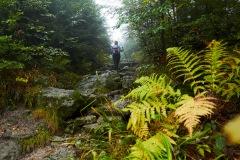 goldsteig-trail-wanderweg-dsc_4904