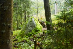 goldsteig-trail-wanderweg-dsc_4909