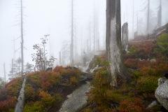 goldsteig-trail-wanderweg-dsc_4948