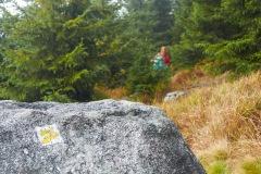 goldsteig-trail-wanderweg-dsc_5002
