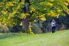 goldsteig-trail-wanderweg-dsc_5076