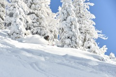 freeride-powder-gosau-200120-yabasta_cz_5329